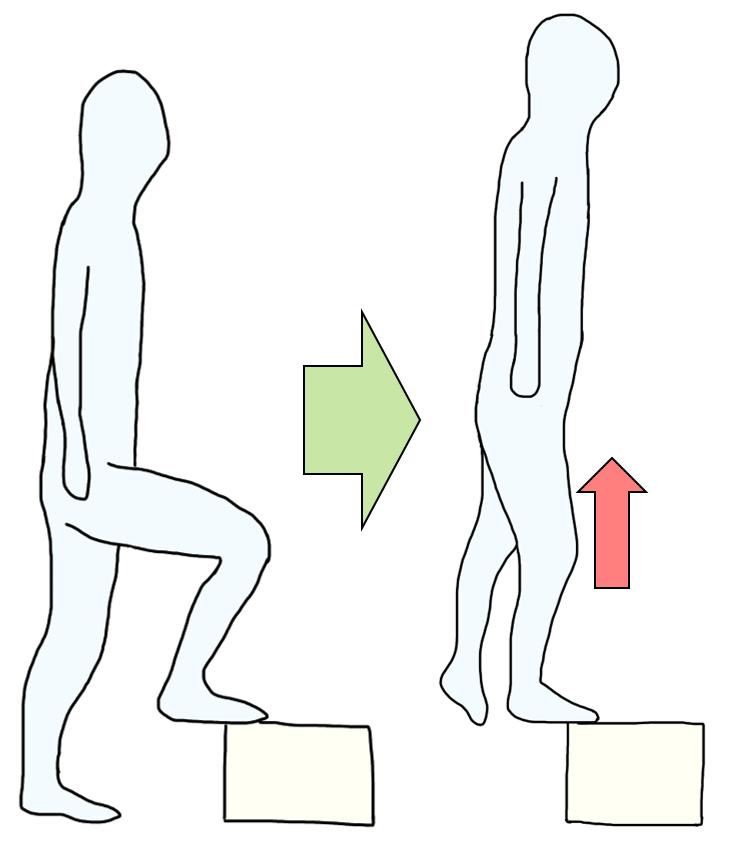 下腿三頭筋の遠心性収縮を意識した筋力トレーニング