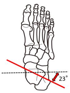 距腿関節横断面運動軸